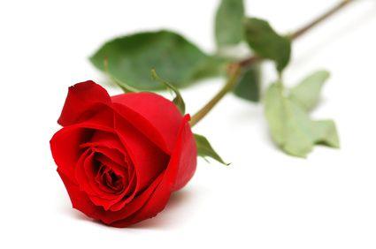 """Résultat de recherche d'images pour """"Rose pour décès"""""""